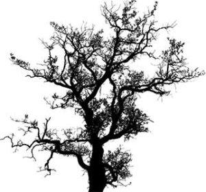 Conte et nouvelle, histoire d'arbres