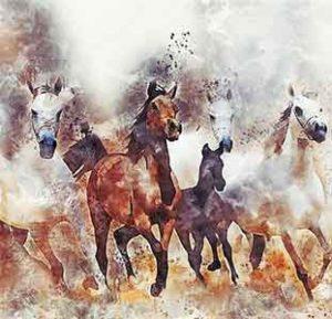 Radio culture, nouvelle sur les chevaux
