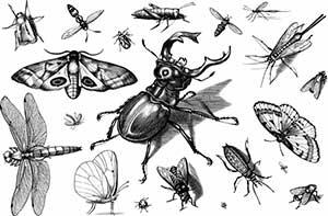 emission radio histoire sur les insectes